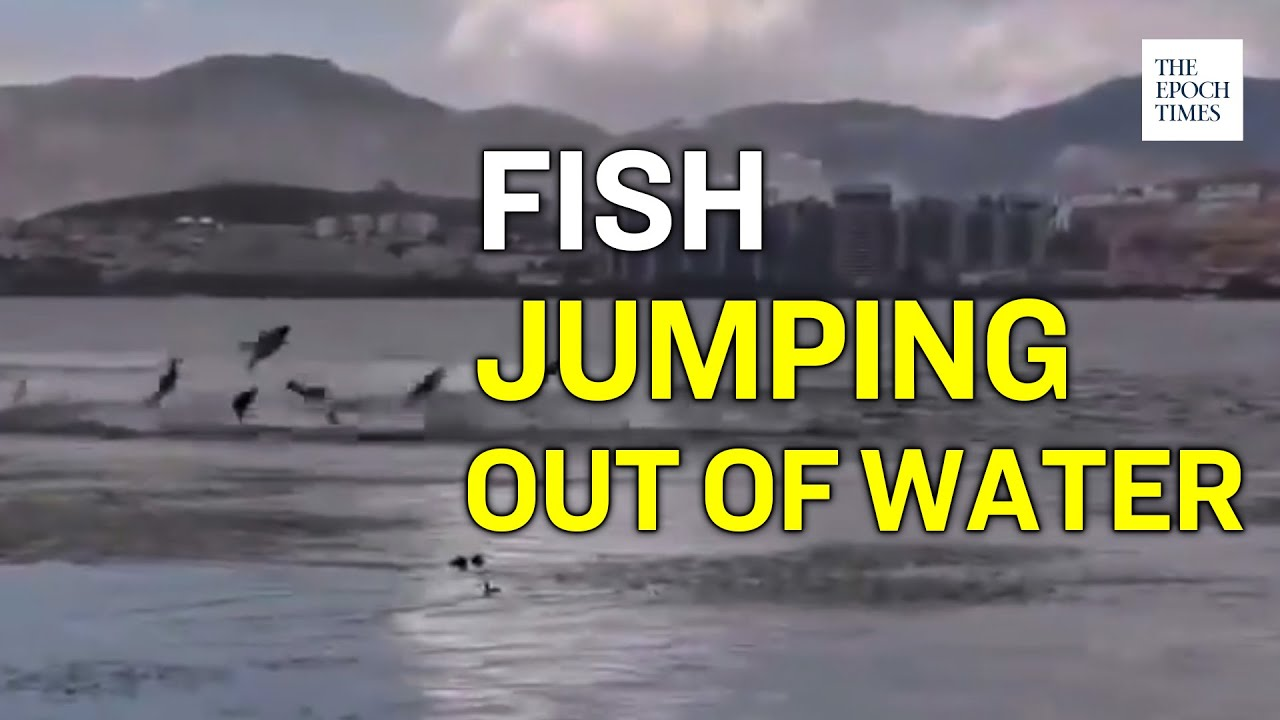 schools-of-fish-jumping-frantically-out-of-the-water-in-various-regions-in-china-epoch-news